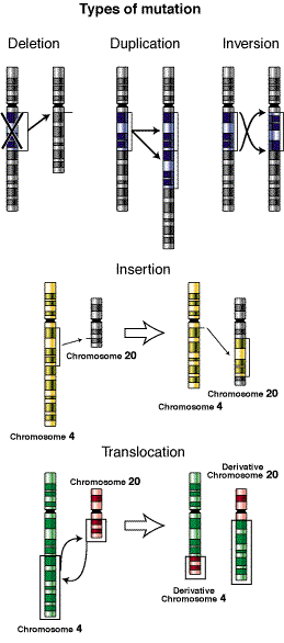 Different types of mutations.