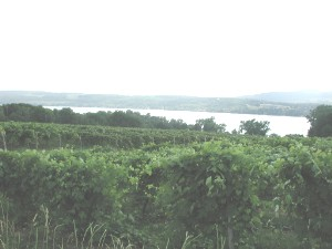Vineyard near Keuka Lake