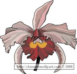 Flower Picture provided by Classroom Clip Art (http://classroomclipart.com)