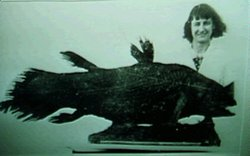 Marjorie Courtenay-Latimer with the first discovered Coelacanth