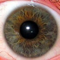 The human eyeThe pupil is the central transparent area (showing as black). The greenish-brown area surrounding it is the . The white outer area is the , the central transparent part of which is the .</center>